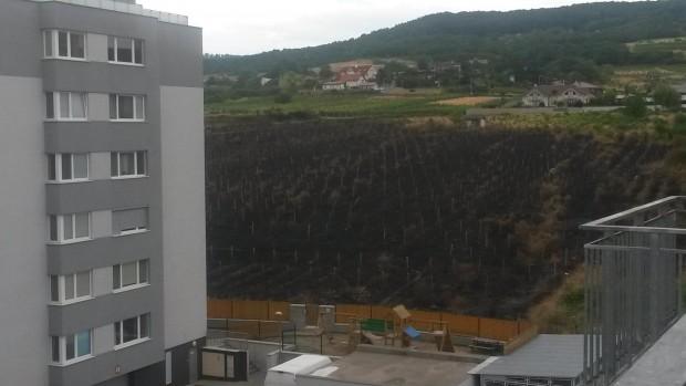 Toto ostalo z neobrábaného vinohradu Rinzle vo štvrtok 23. júla.