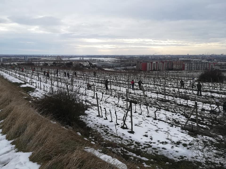 Súťažné úseky sa okolo desiatej zaplnili vinohradníkmi.